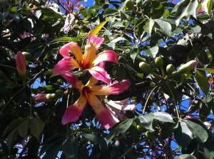 flor exotica
