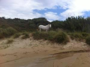 caballo en la playa
